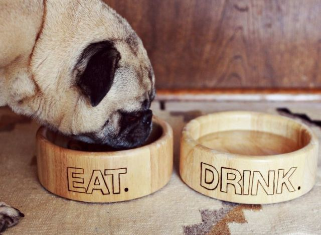 craft of the day pet dishes