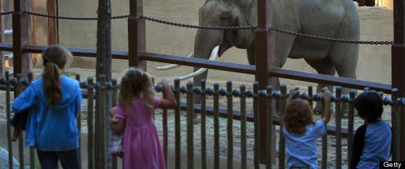 BILLY THE ELEPHANT LA ZOO