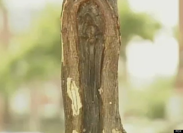 virgin mary tree trunk