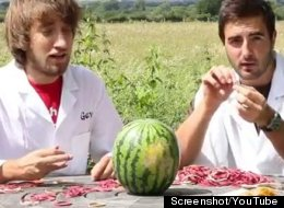 Watermelon Guys