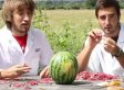 Rubber Bands Make Watermelon Explode -- From 'Slow Mo Guys' (VIDEO)