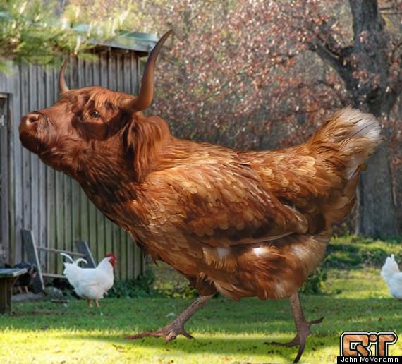 cockandbull
