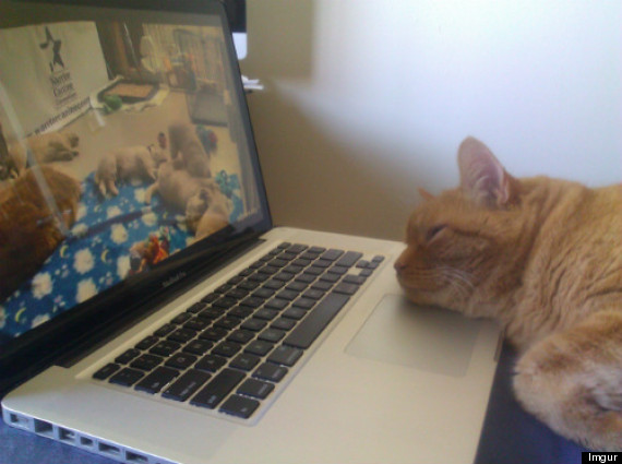 cat watching puppy live feed