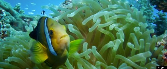 MARSHALL ISLANDS THREATENED REEFS