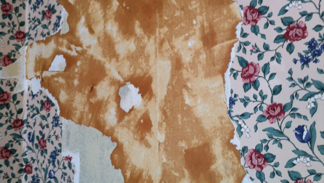 Wall Paper Removal how to remove wallpaper with vinegar | huffpost