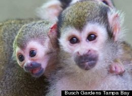 Baby Monkey Photos