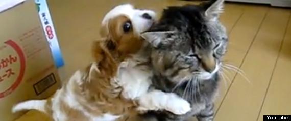 25 SECOND CAT VIDEOS