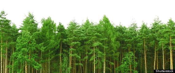 MALE TREES BATTLE OF SEXES