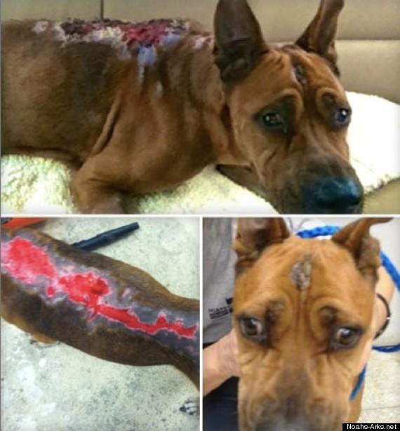 bentley courage burned dog miami