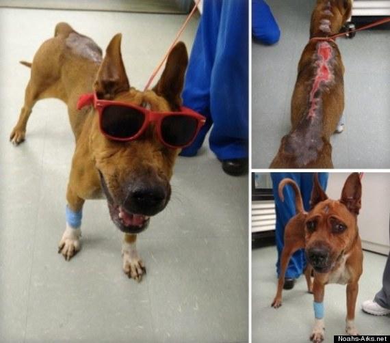bentley courage dog burned miami animal cruelty
