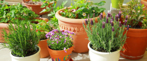 HOW TO CLEAN FLOWER POTS
