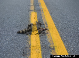 Painted Roadkill