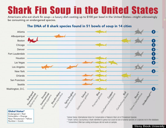 Threatened Species Used In Shark Fin Soup Across U S  | HuffPost