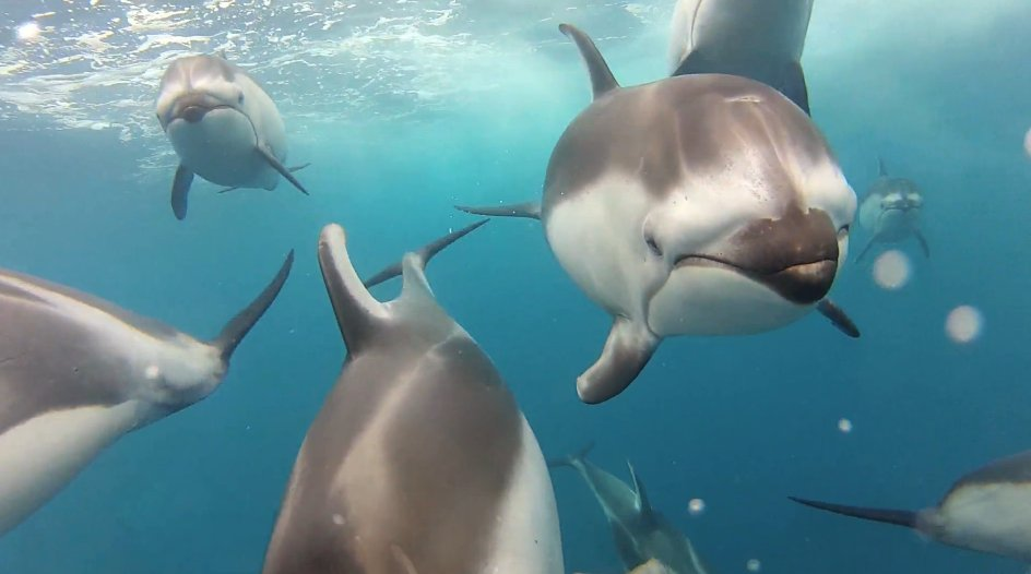 dolphins swimming gopro camera