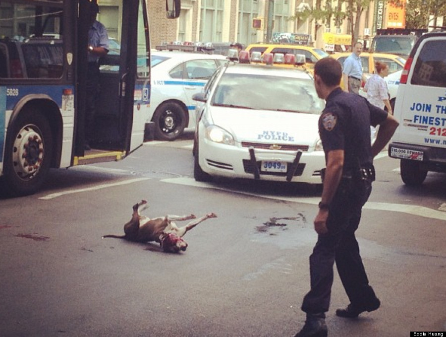 nypd shoot dog
