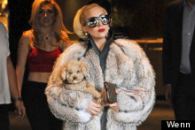 Puppy Love: Lady Gaga's Fur Coat And Furry Friend Take On The Bulgarian Summer