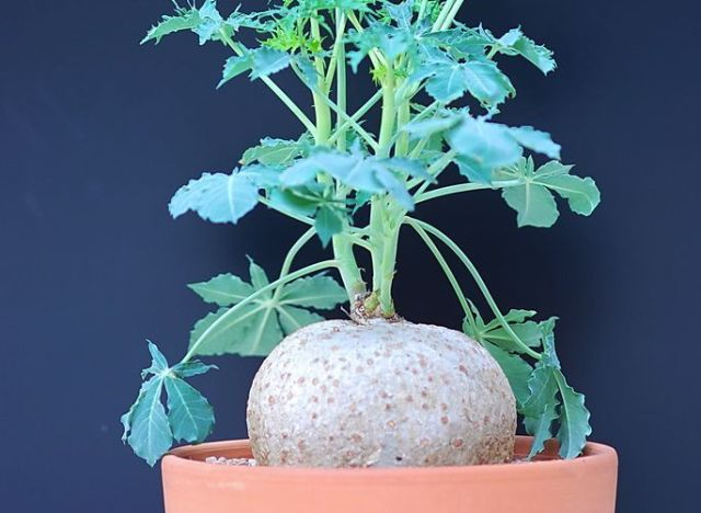 sprout home plant of the week