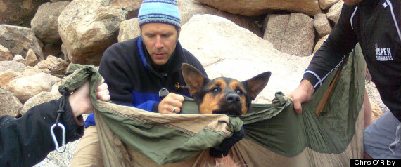 DOG RESCUE COLORADO