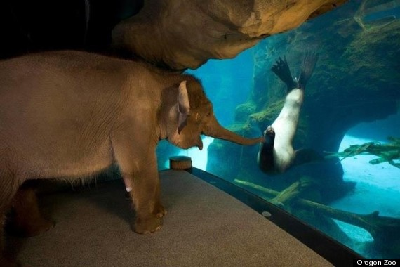 elephant sea lion