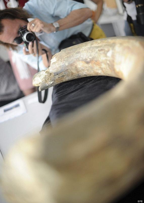 colmillo mamut metro