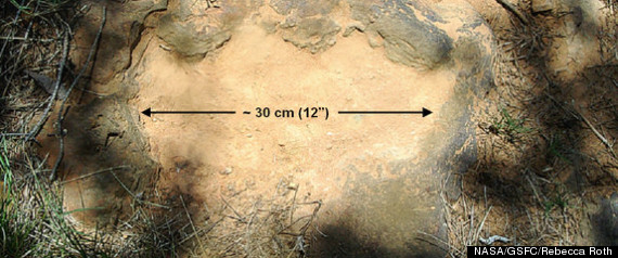 Nodosaur Footprints