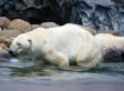 Oil Company Polar Bear Rules Affirmed By Appeals Court