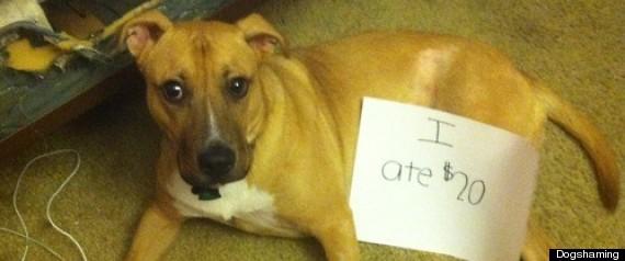 Dogshaming Tumblr Photos