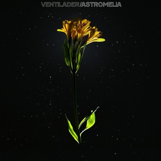 astromelia portada