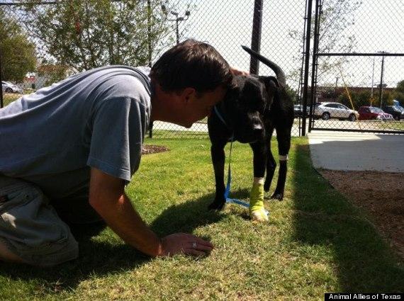 pappy dog rescued found jar on head paw cut