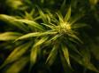 RNC vs. DNC -- Will Medical Marijuana Decide the Election?