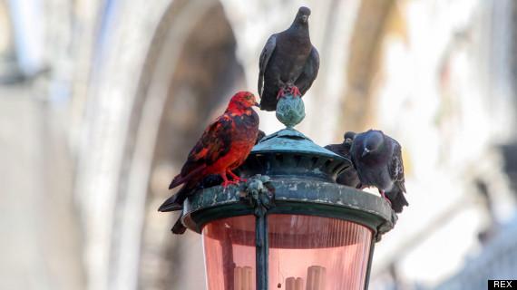 pigeons lamp