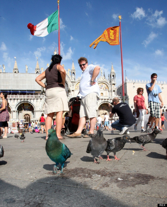 pigeons walk