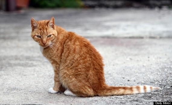essex cat