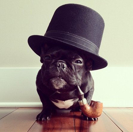 french bulldog hat trotter the hipster french bulldog probably has more 4077