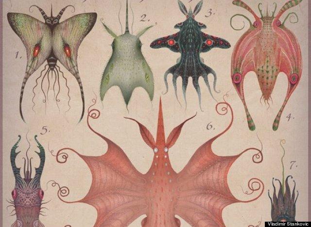 cephalopodoptera tab v