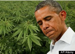 Obama Marijuana Legalization