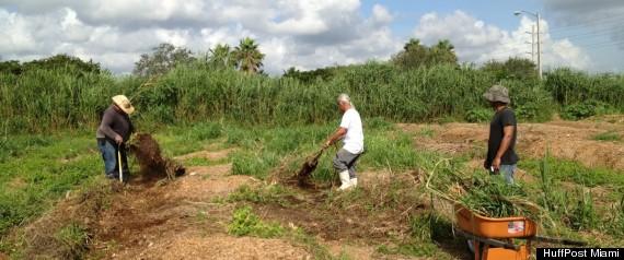 HOMELESS LIVE WORK FARM HOMESTEAD