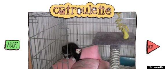 CATROULETTE CHATROULETTE CATS