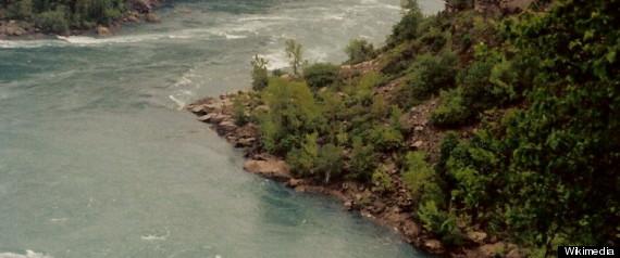 Lake Erie Dead Fish Dead Birds Mass Animal Death