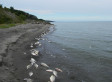 Dead Fish, Birds Wash Up On Lake Erie Shores In Latest Mystery (PHOTO)