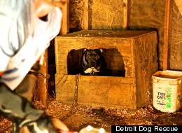 Detroit Dog Rescue Marijuana Bust