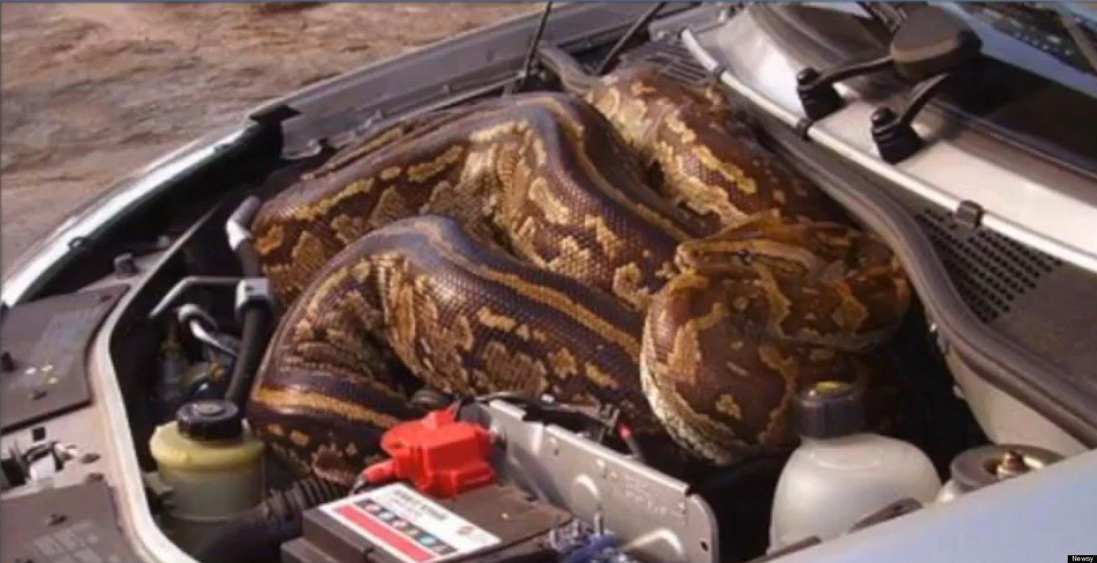 Python-under-car-hood-facebook
