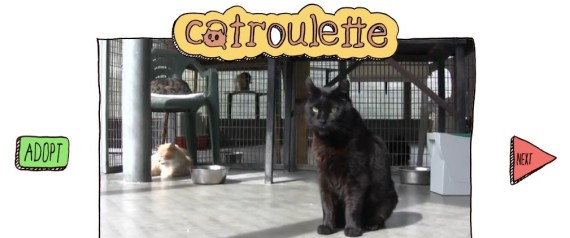CATROULETTE CHAT ADOPTION CHATROULETTE