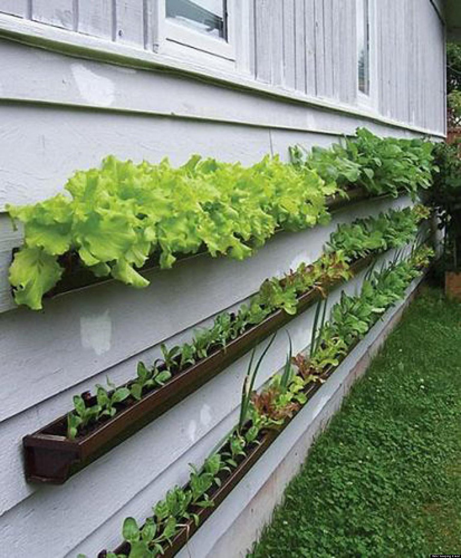 Вертикальный огород для балкона город-сад.