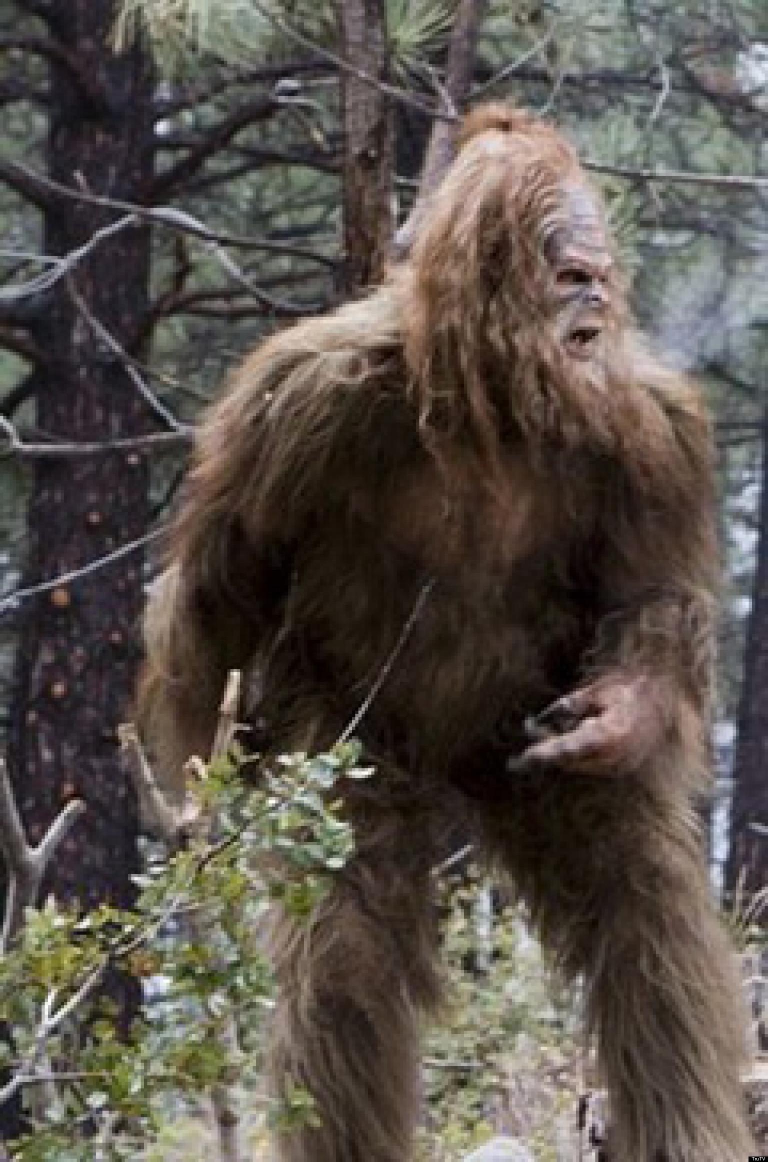 9 Best Sites to Find Bigfoot Pictures Online Top Secret Best photo of bigfoot