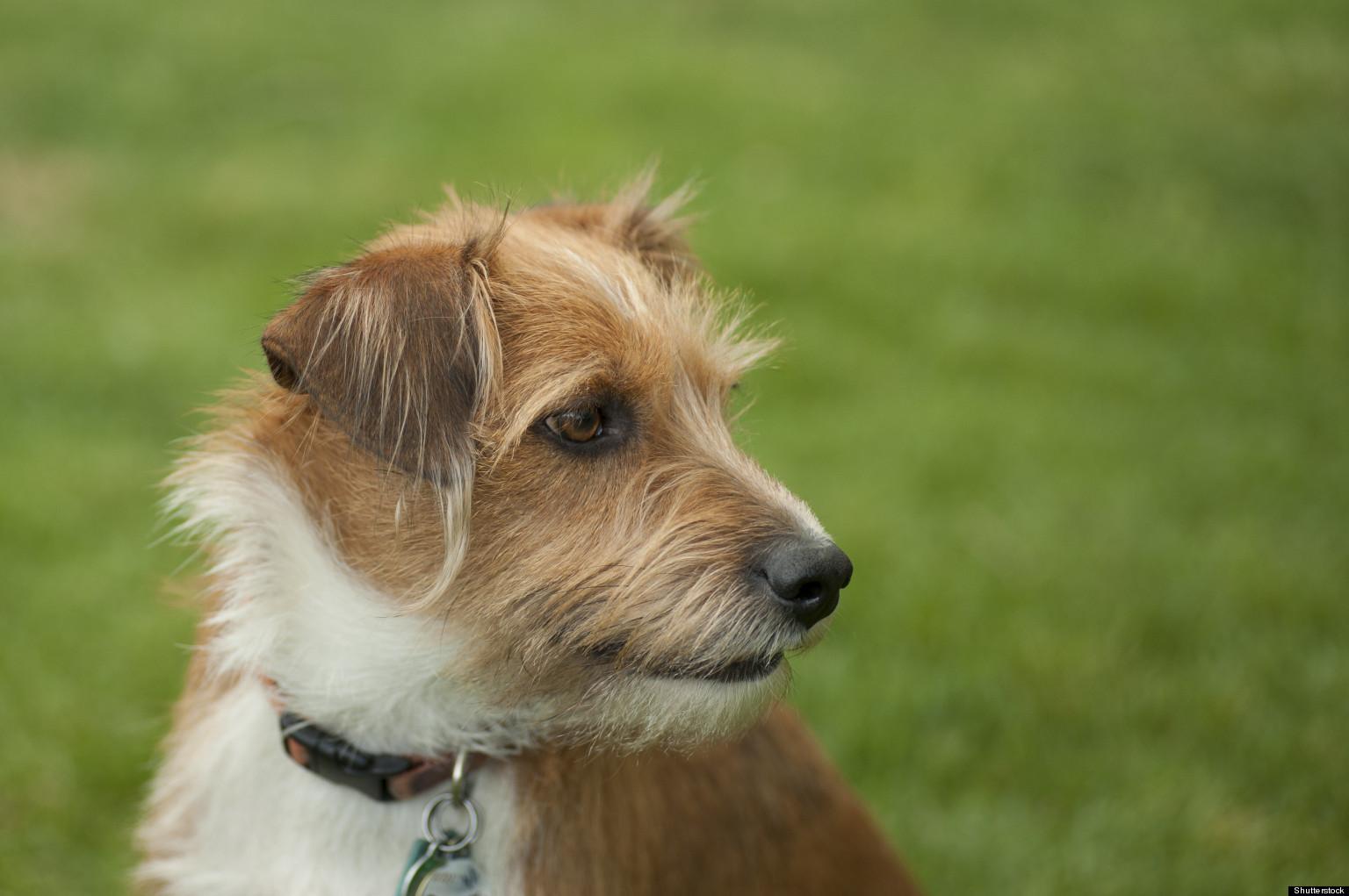 Light Dog Breeds