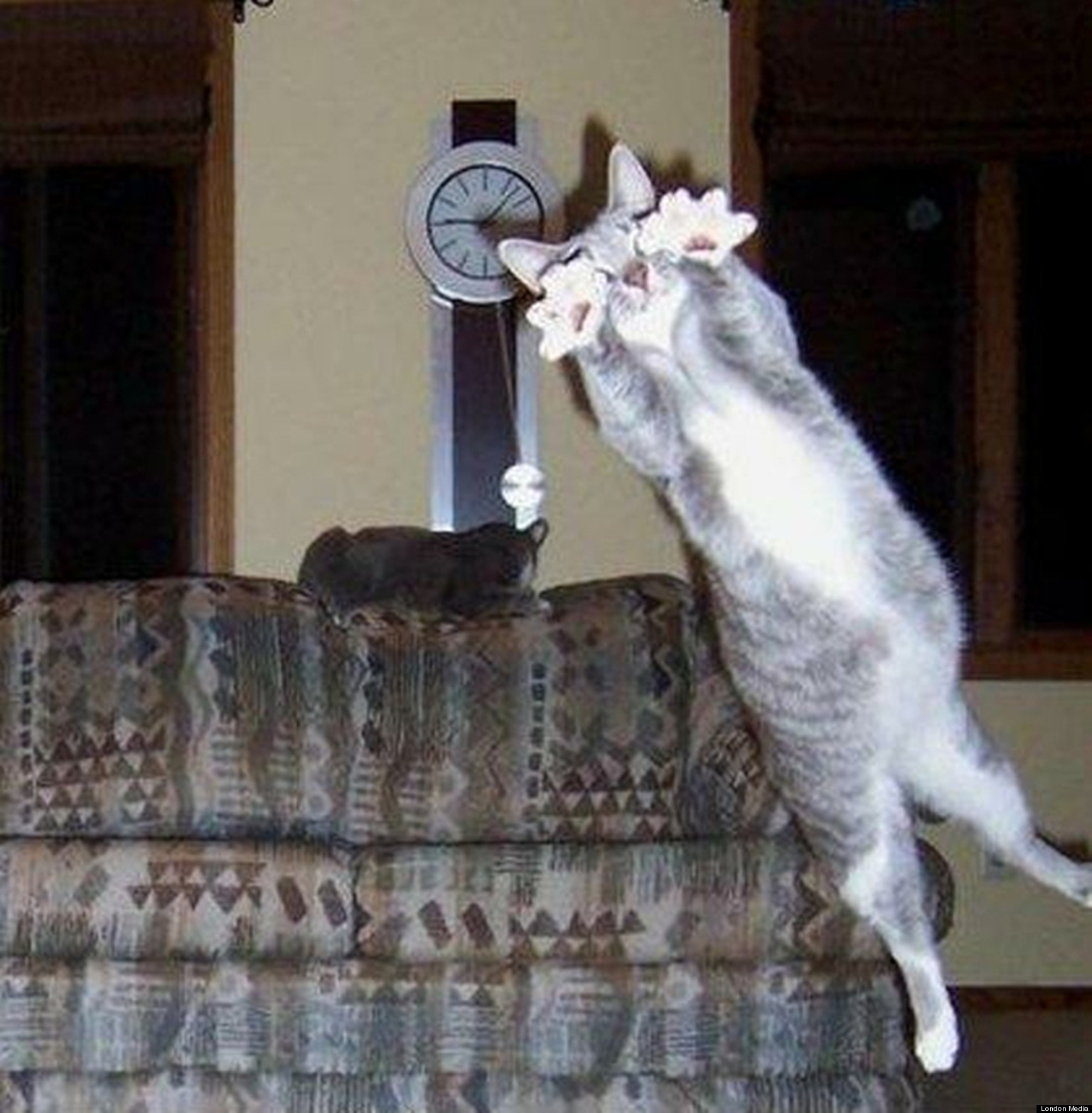Photobomb Pictures Animals 10 Hilarious Animal Photobombs
