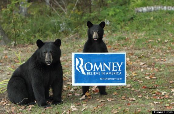 bearsarerepublicans
