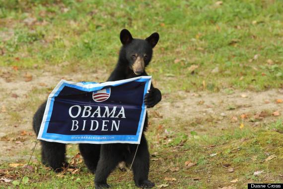 bearsarerepublicans2
