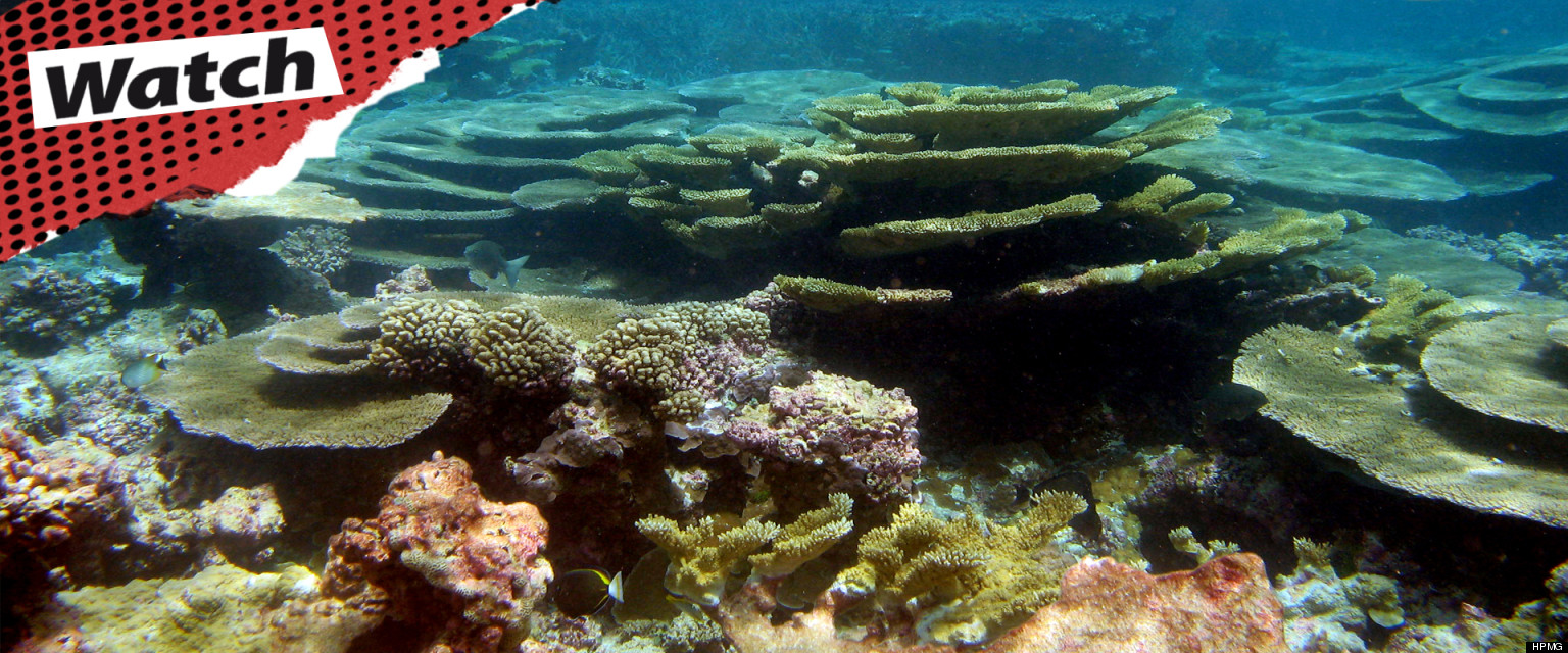 an overview of the coral reefs Overview indonesia is part of the coral triangle, a region that contains the highest diversity of marine life in the world more people live close to reefs in indonesia than anywhere else on the planet.
